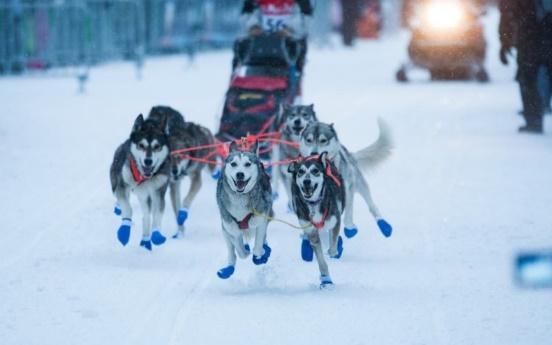 Dog sledding is a popular winter pastime in Megève