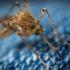 Comment se débarrasser des moustiques tigres à Saint-Tropez