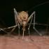 Intervention face aux moustiques à Brignoles : les tarifs